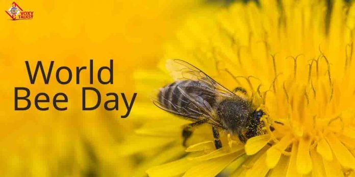 World Bee Day- Purpose, History, Slovenia,Importance, theme,save the bees-Voxytalksy