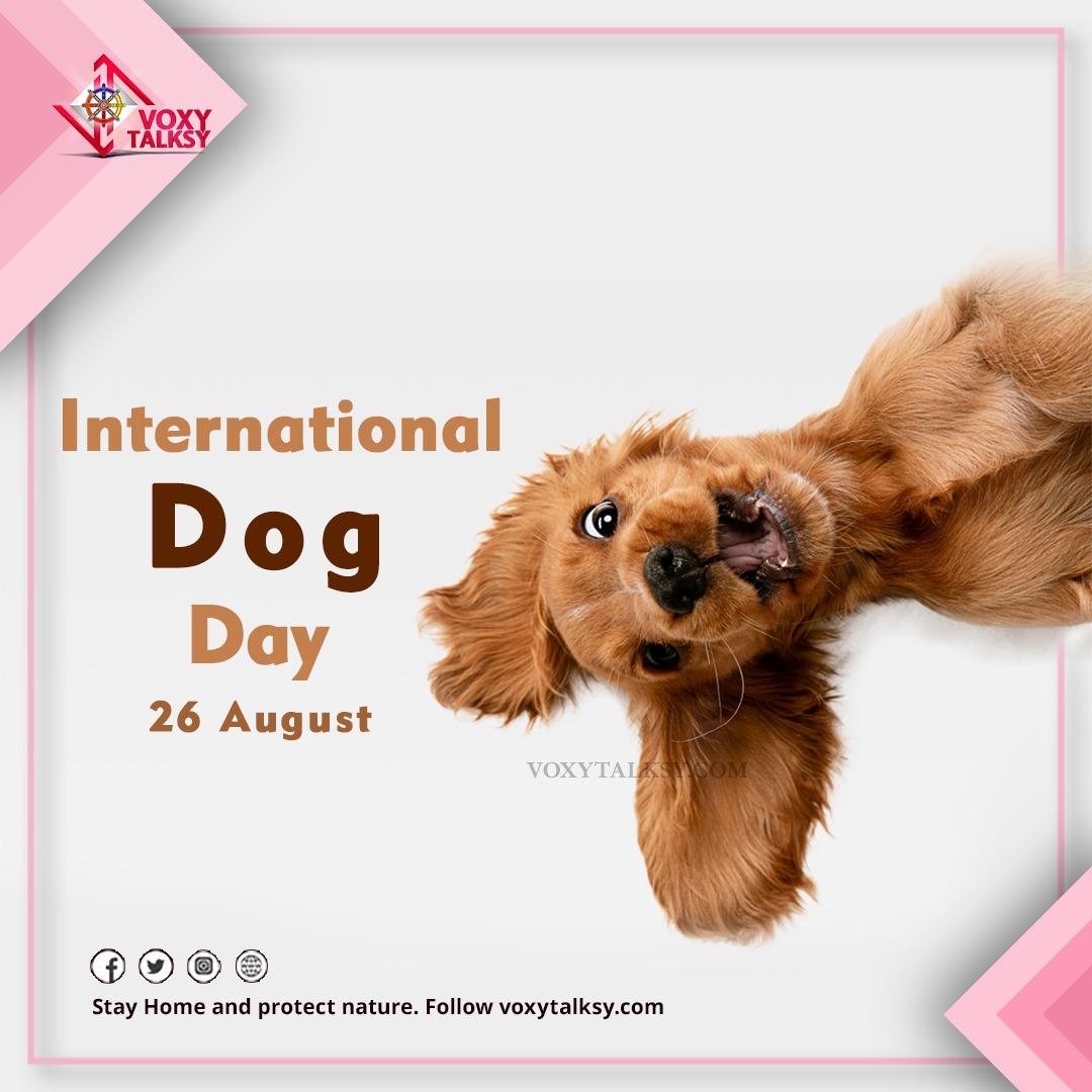 2020 International Dog Day | VoxyTalksy